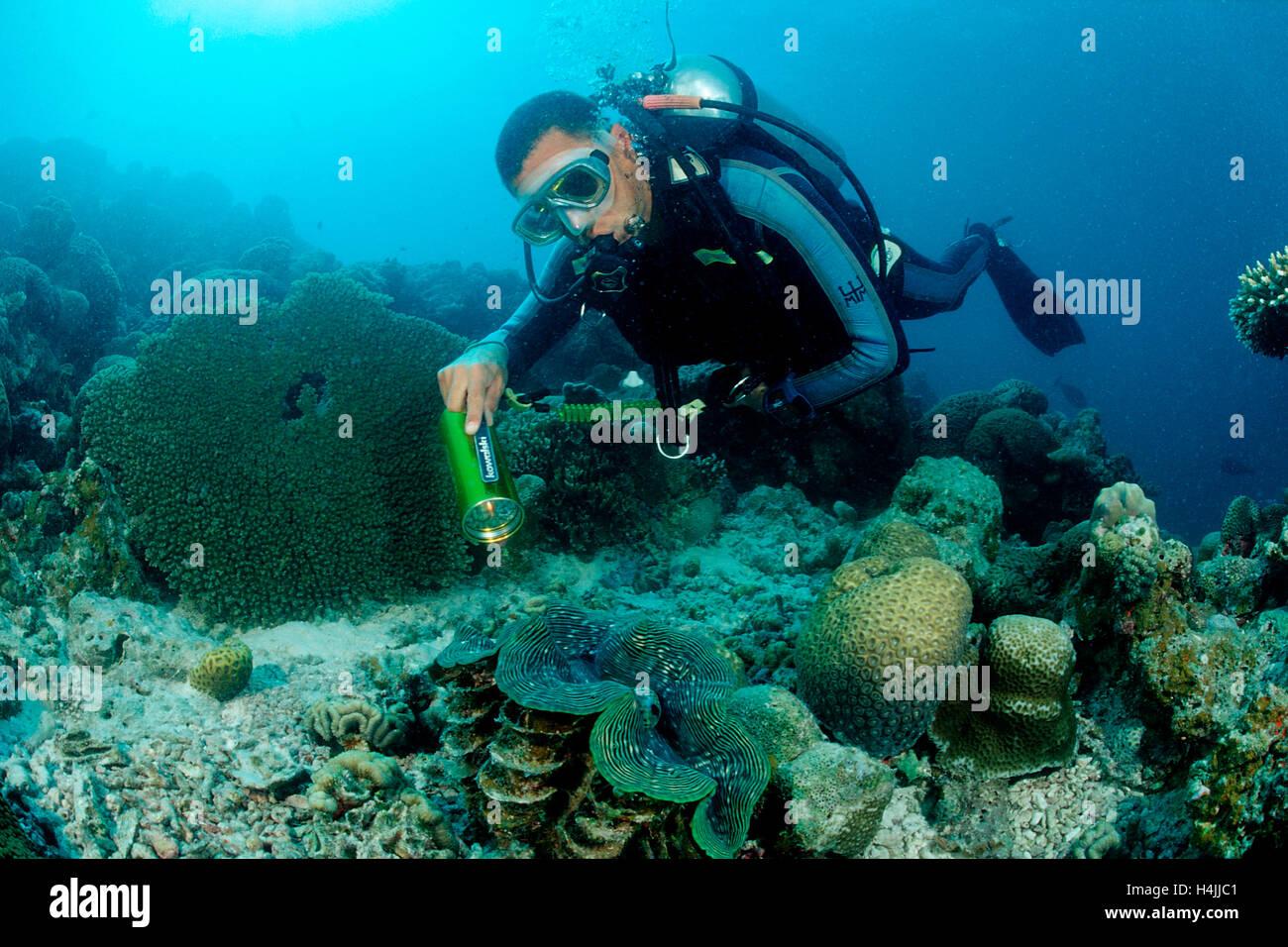 Diver y estrías (almeja gigante Tridacna squamosa), el Océano Índico, Maldivas Foto de stock