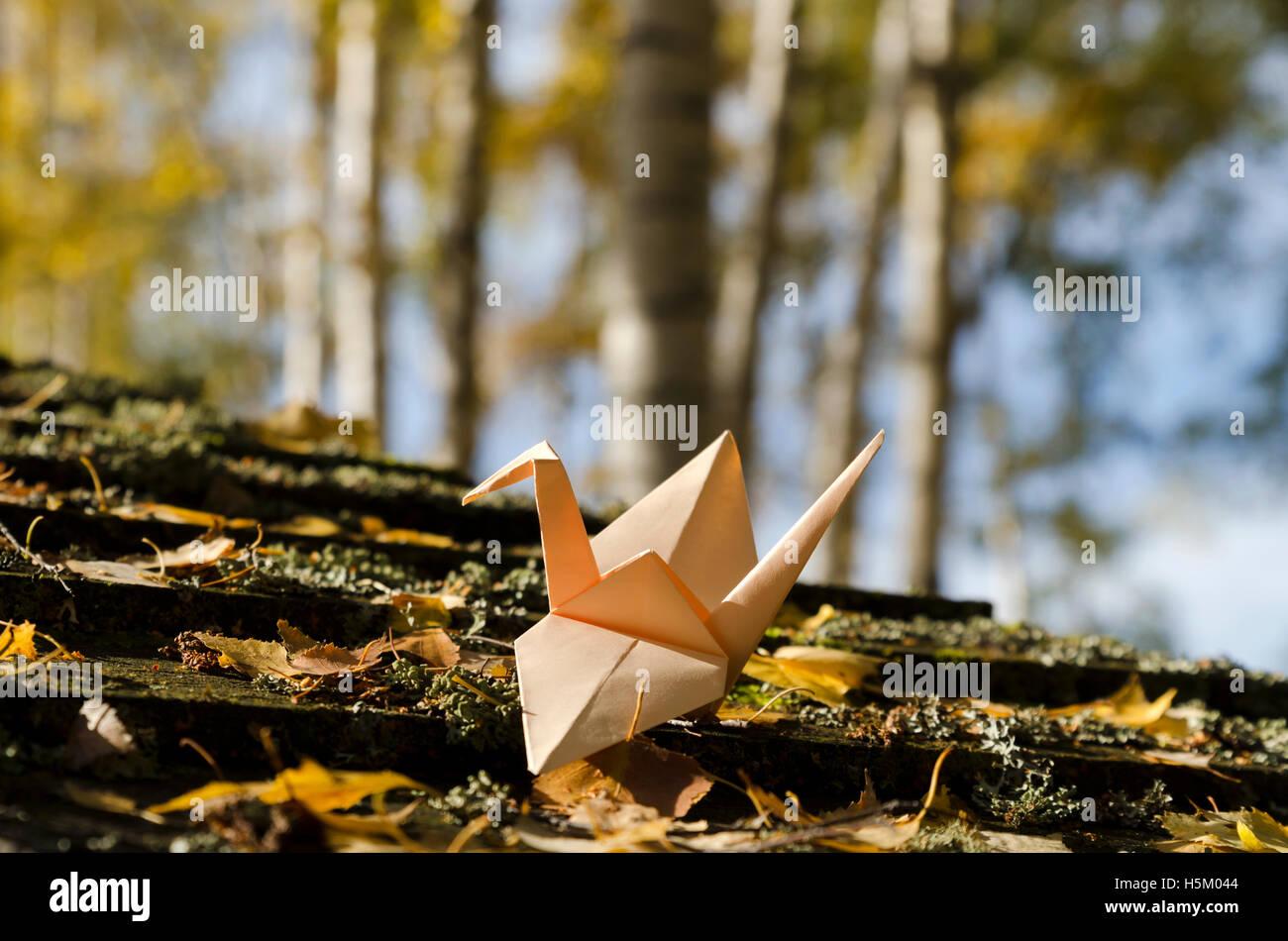 Color crema grúa en una madera de abedul Imagen De Stock