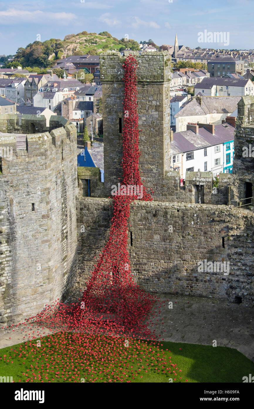 Alta Vista de ventana llorando escultura de cerámica de arte amapolas rojas muestran en Caernarfon Castle paredes. Imagen De Stock