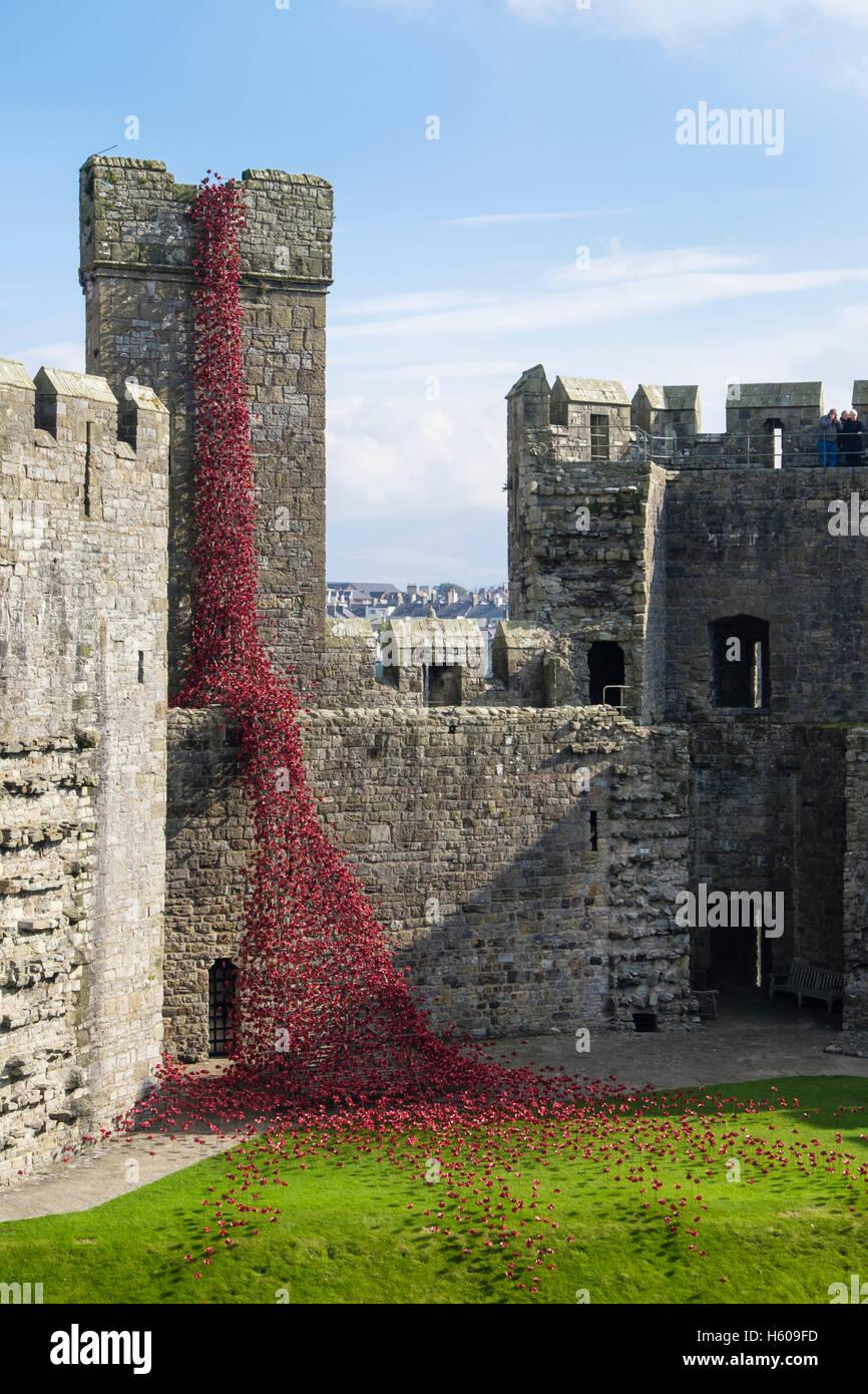 Ventana llorando escultura de cerámica de arte amapolas rojas muestran en Caernarfon Castle paredes. Gwynedd Imagen De Stock