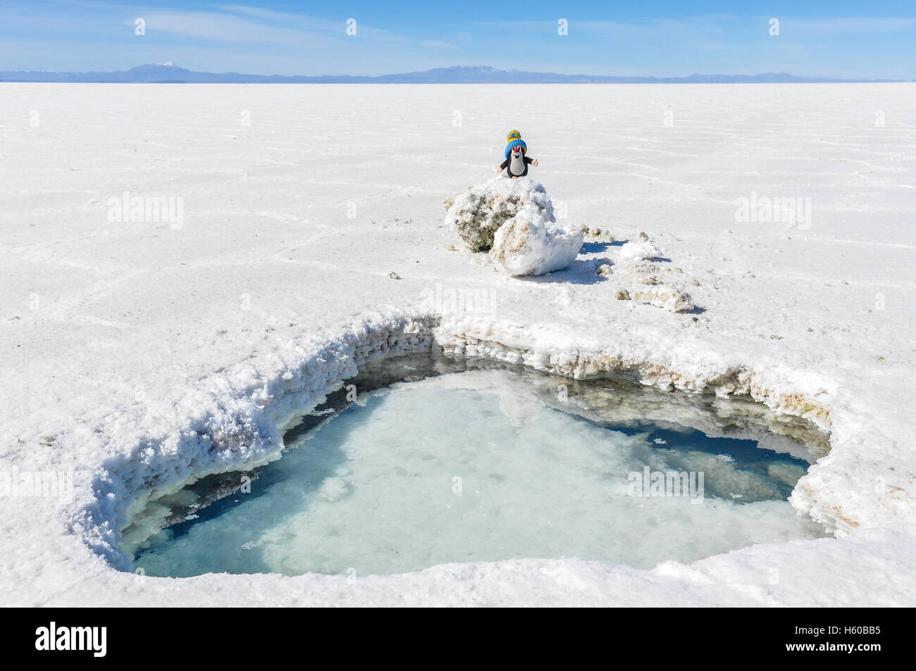 Lindo peluche en el Salar de Uyuni, el salar más grande en el mundo, Bolivia Imagen De Stock