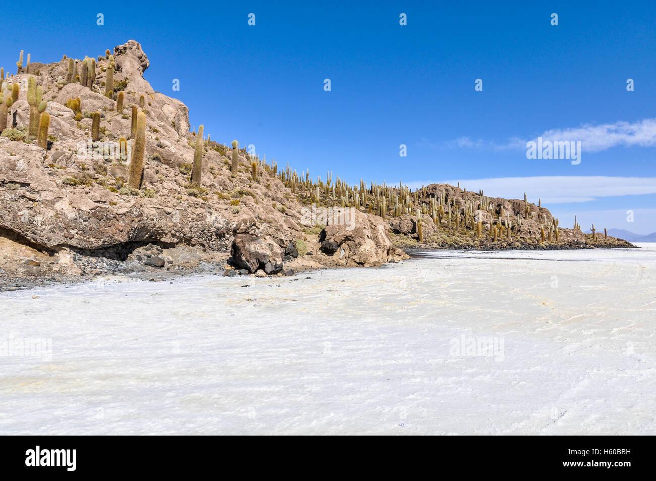 Grupo de cactus en la Isla del Pescado en el Salar de Uyuni, el salar más grande en el mundo, Bolivia Imagen De Stock