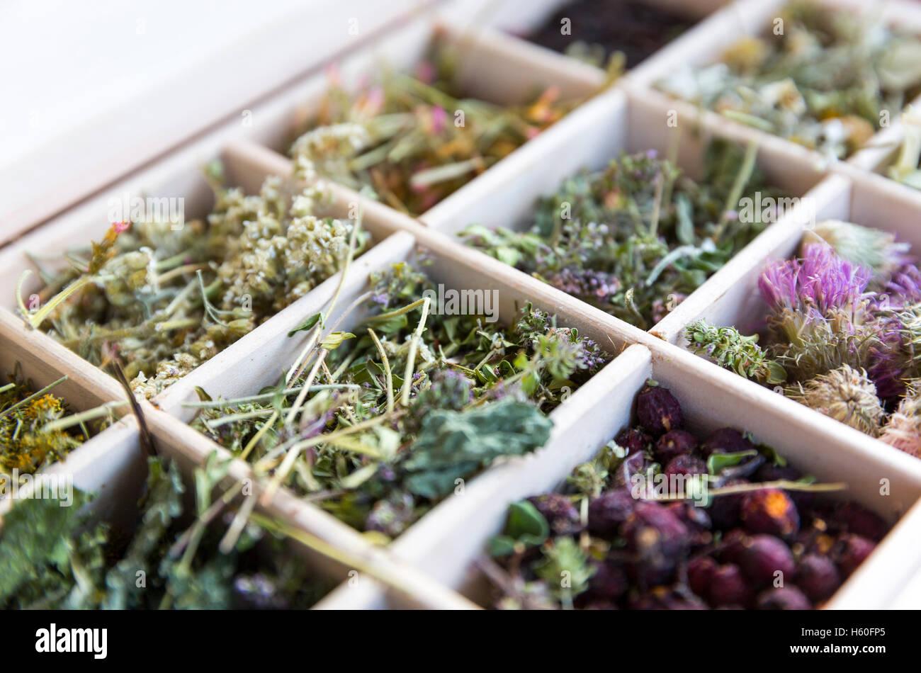 Diferentes hierbas secas en una caja de té de madera. Imagen De Stock
