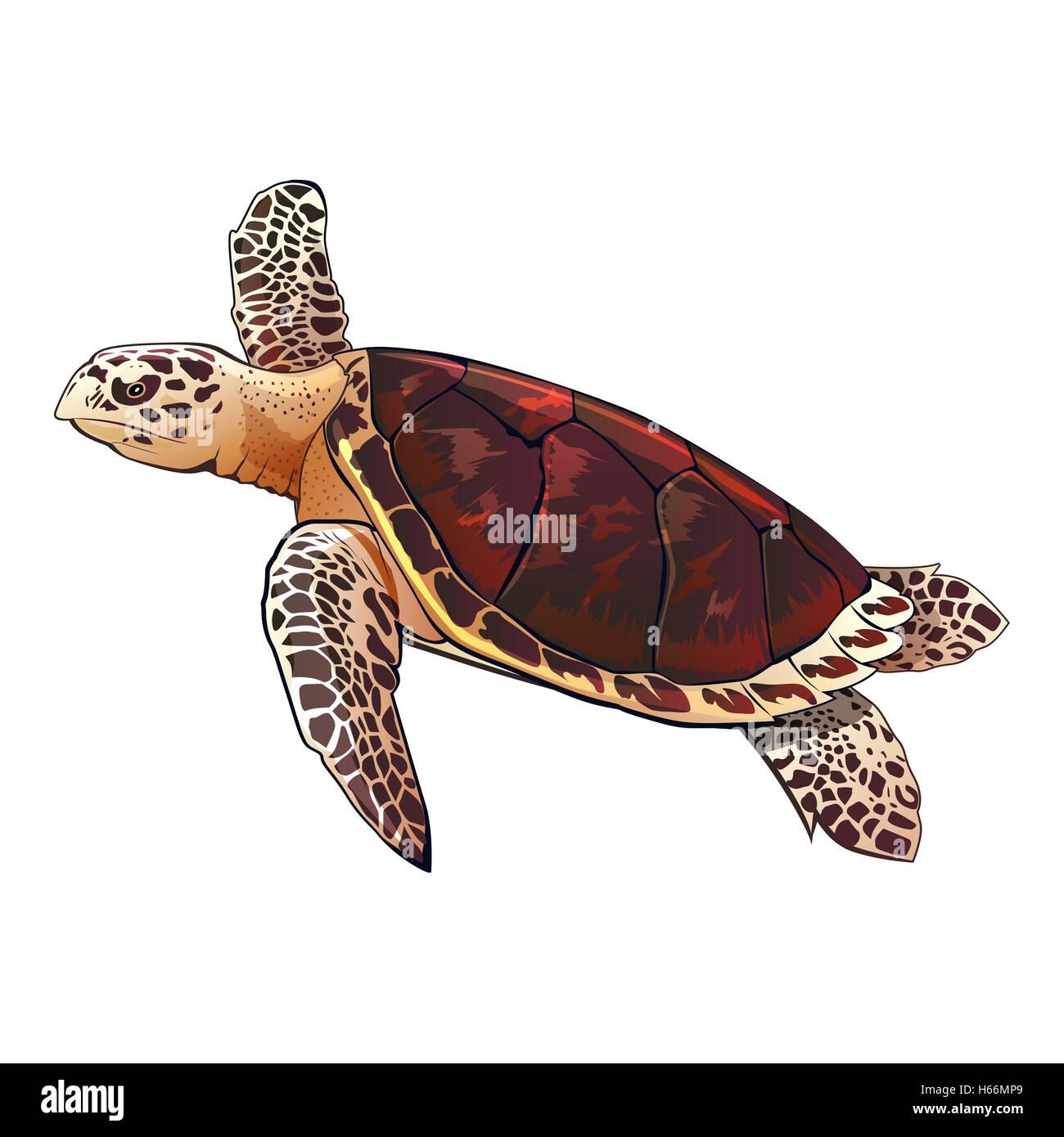 Ilustración de Tortugas Marinas Foto & Imagen De Stock: 124308529 ...