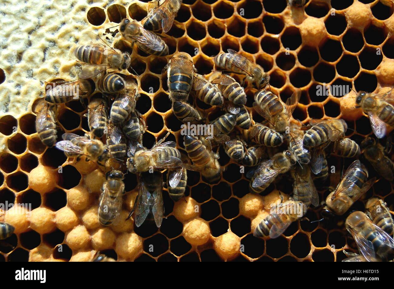 arañas de los insectos Imagen De Stock