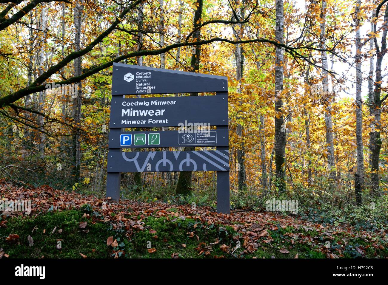 Recursos naturales Gales signo Bosque Minwear Canaston Woods Cymru de Gales pembrokeshire REINO UNIDO GB Imagen De Stock