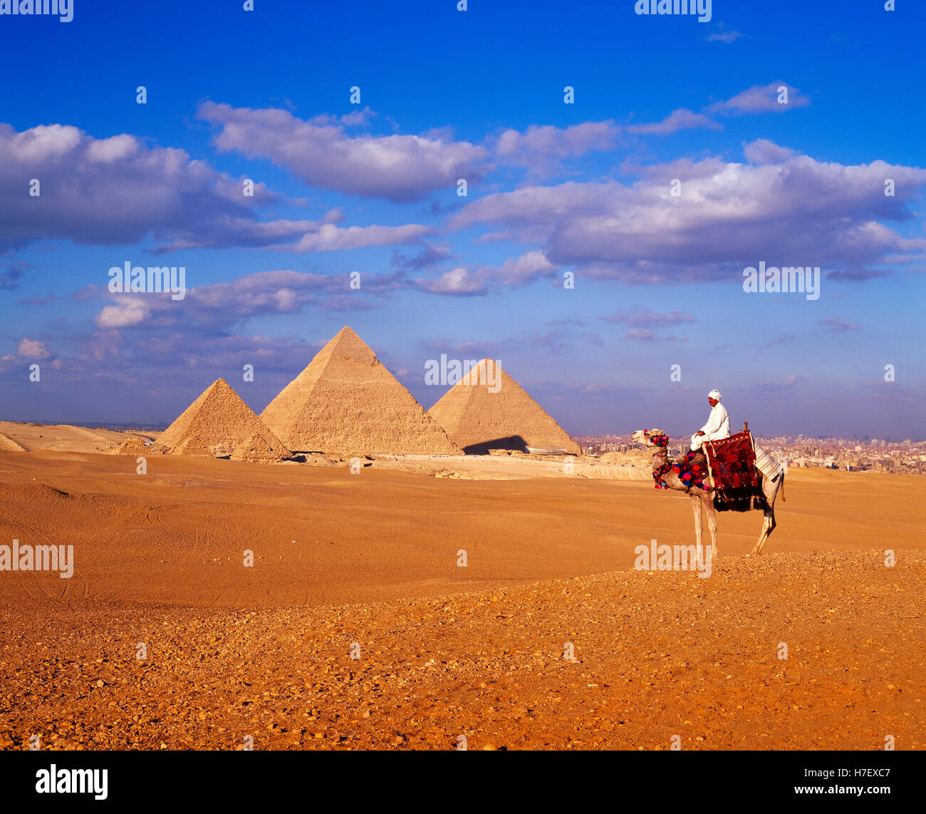 Pirámides y camellos, en Giza, Egipto Imagen De Stock