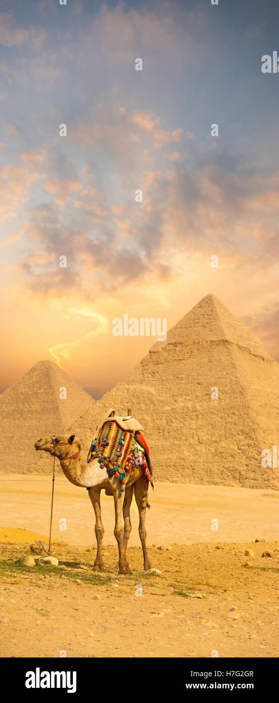 Brillante puesta de sol detrás de camel con coloridos sillín en frente de las pirámides egipcias Imagen De Stock