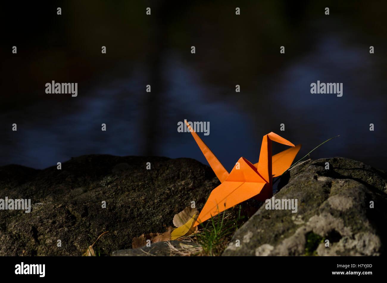 Grúa naranja ona rock y reflejos de agua Imagen De Stock