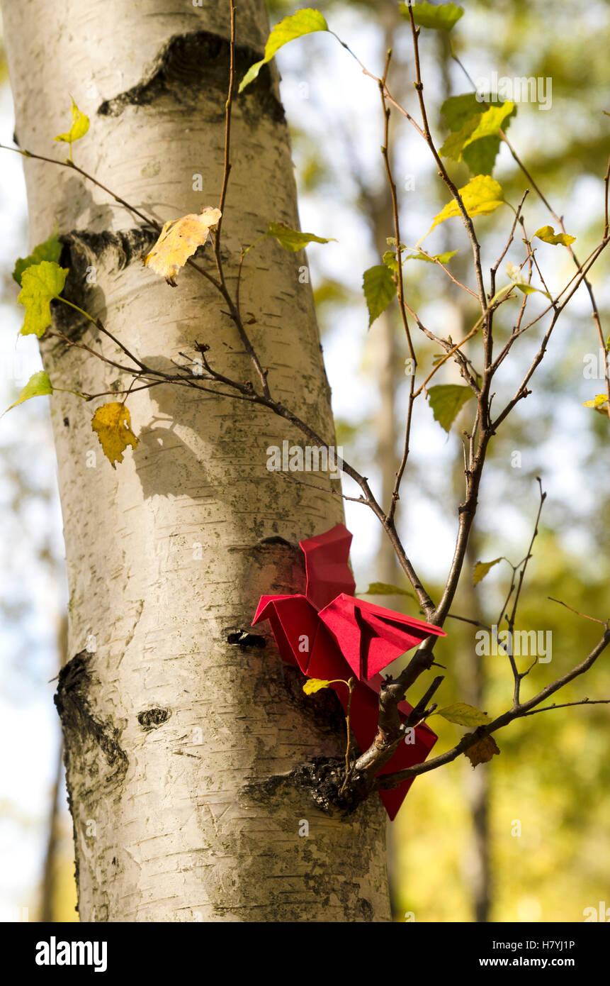 Pájaro rojo sobre el abedul Imagen De Stock