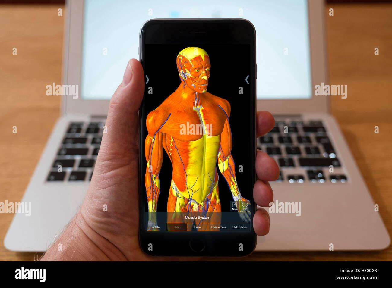 Excelente Aplicaciones De Anatomía Para Iphone Patrón - Anatomía de ...