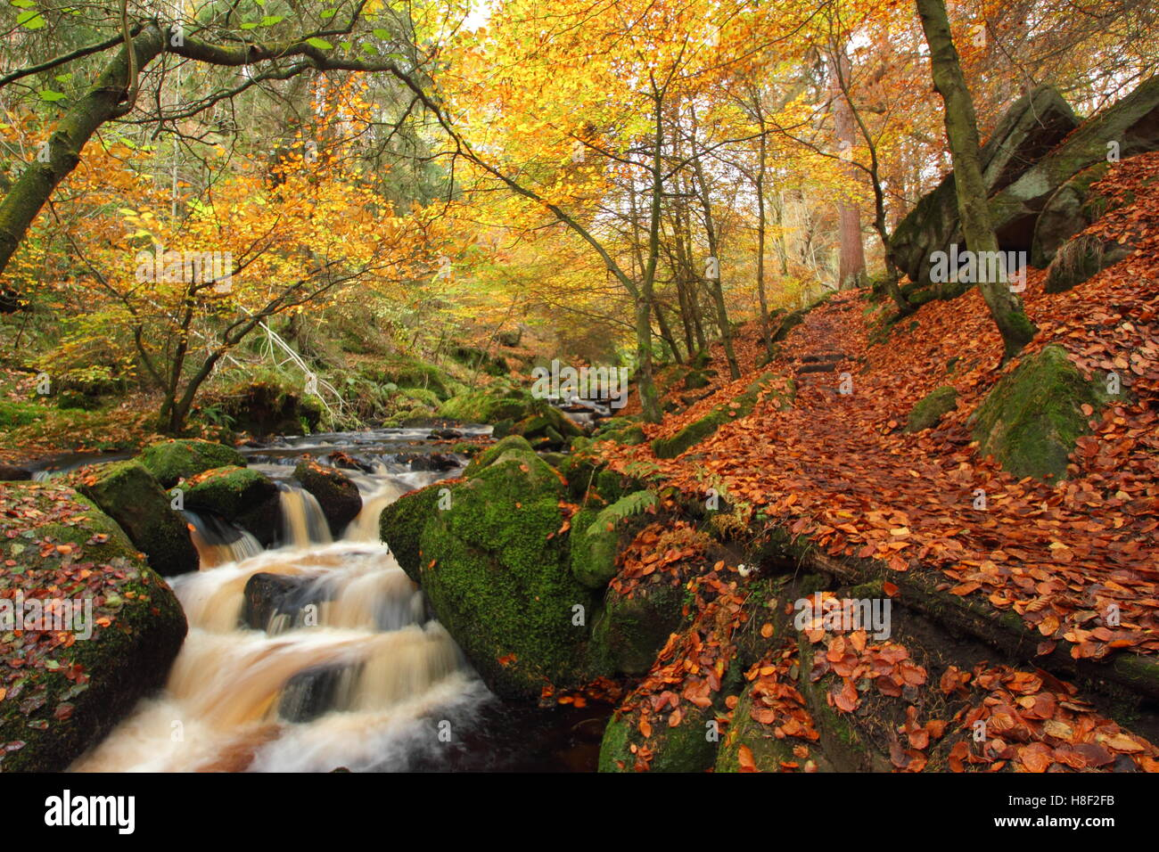 Una ruta a través de Wyming Brookn reserva natural en otoño en la ciudad de Sheffield, Peak District National Park, Foto de stock