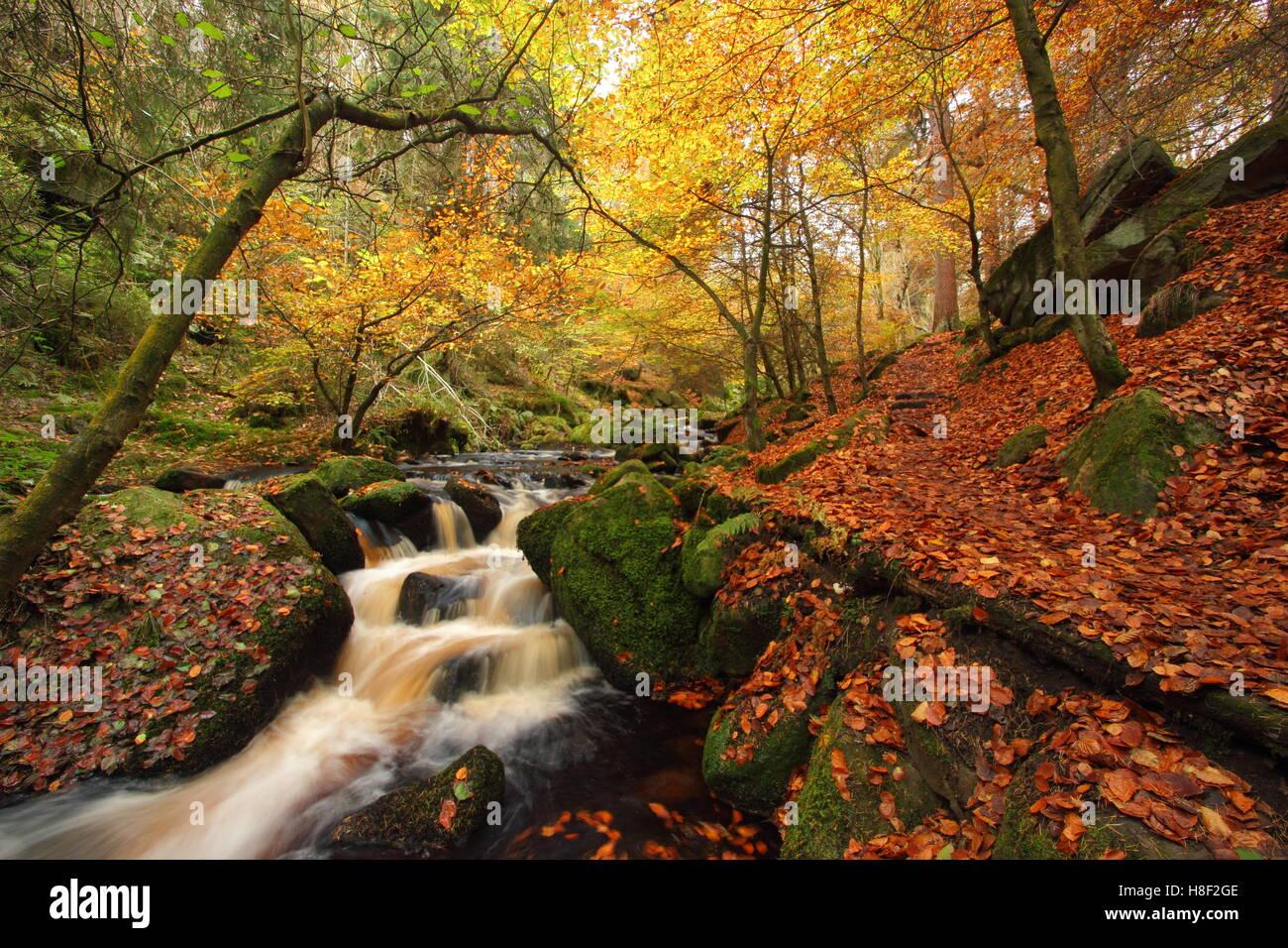 Wyming Brook en otoño en la ciudad de Sheffield, Peak District National Park, South Yorkshire, norte de Inglaterra, Foto de stock