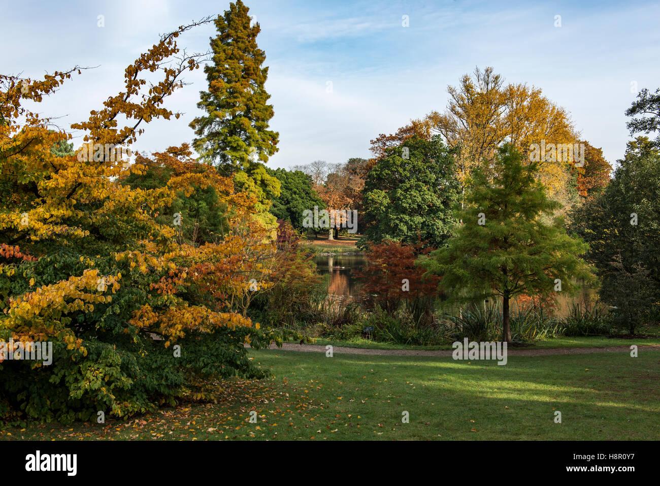 Escena de otoño en el Jardín Botánico de Kew Foto de stock