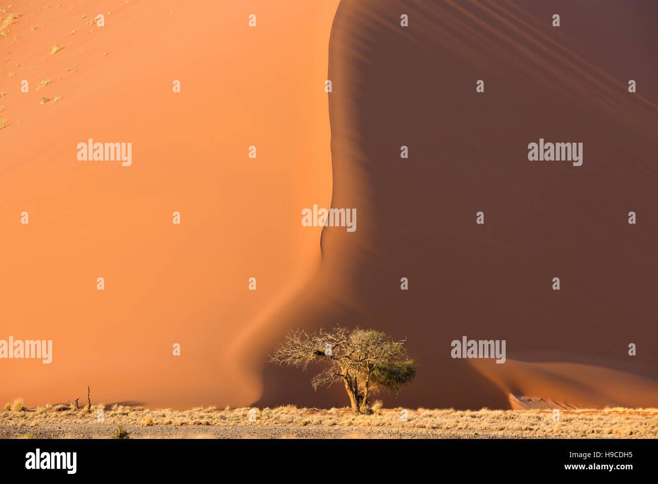 Vista de árbol cerca de duna rojo en la parte sur del desierto de Namib, en el Parque Namib-Naukluft de Namibia Imagen De Stock