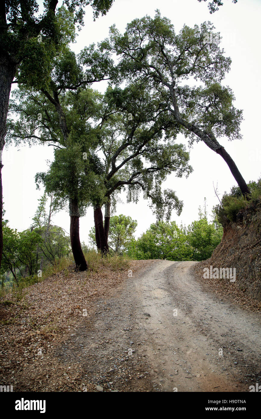 Carretera de montaña revestida con castaños en Andalucía, España. Foto de stock