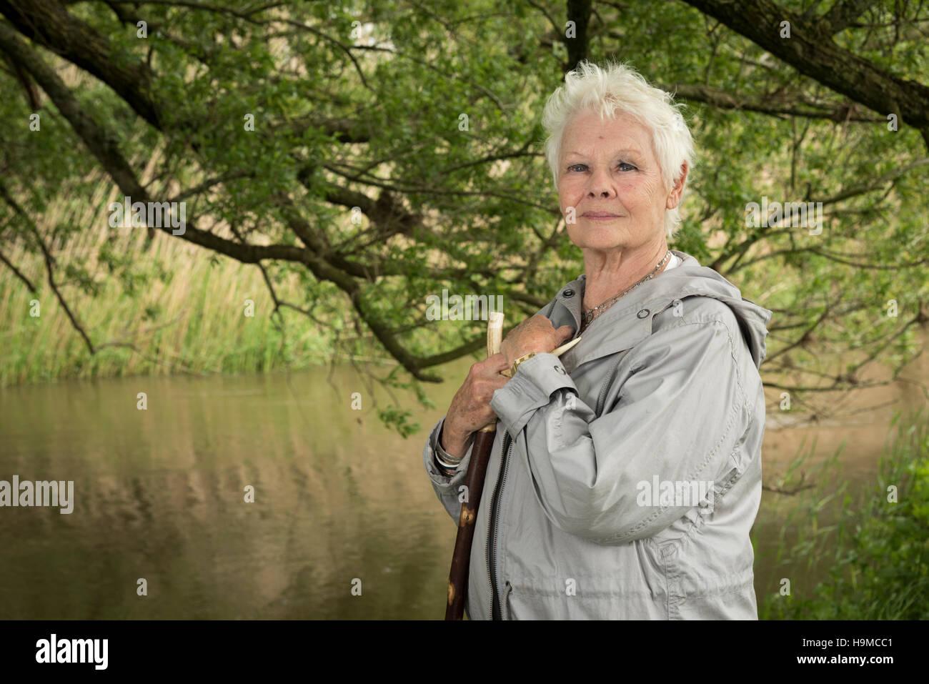 Dame Judi Dench posando en el campo Foto de stock