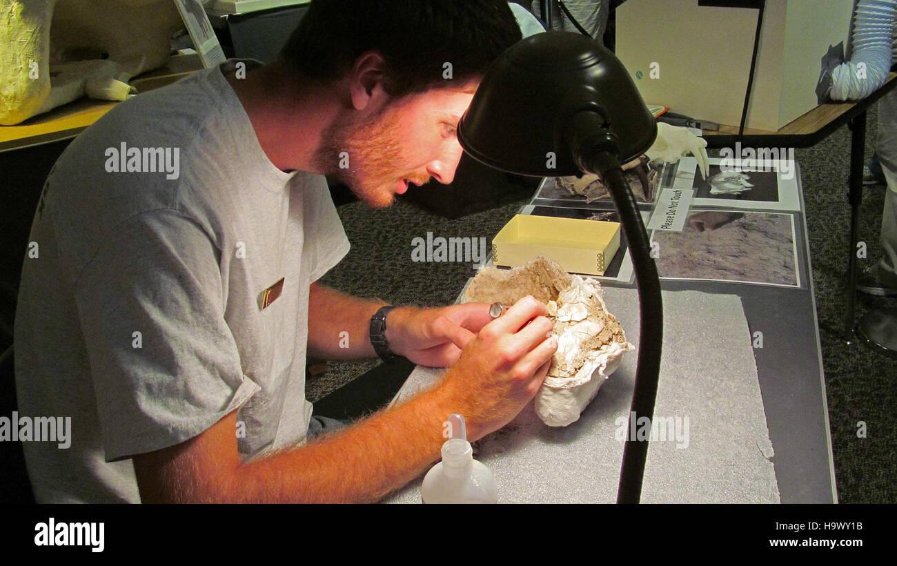 7666227738 badlandsnationalpark Danny trabajando en Oreodont Cráneo fósil 6 Foto de stock