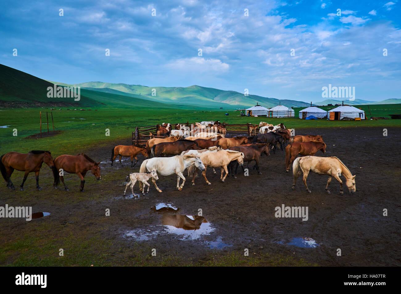 Mongolia, provincia Ovorkhangai, Orkhon Valley, campamento nómada Imagen De Stock