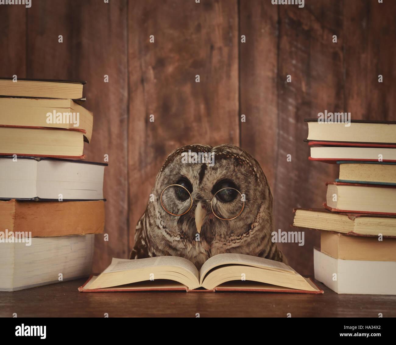 Una lechuza, animal con gafas está leyendo un libro en el bosque para una educación escolar o concepto. Foto de stock