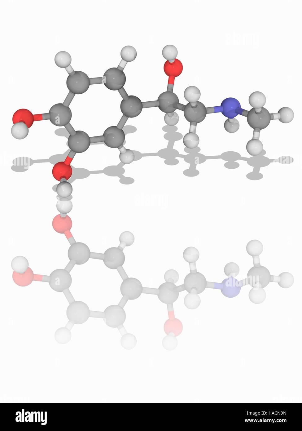 La Epinefrina Modelo Molecular De La Hormona Y