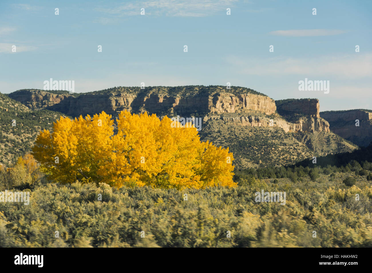 Colorado, Ute Mountain Tribal Park, paisaje Imagen De Stock