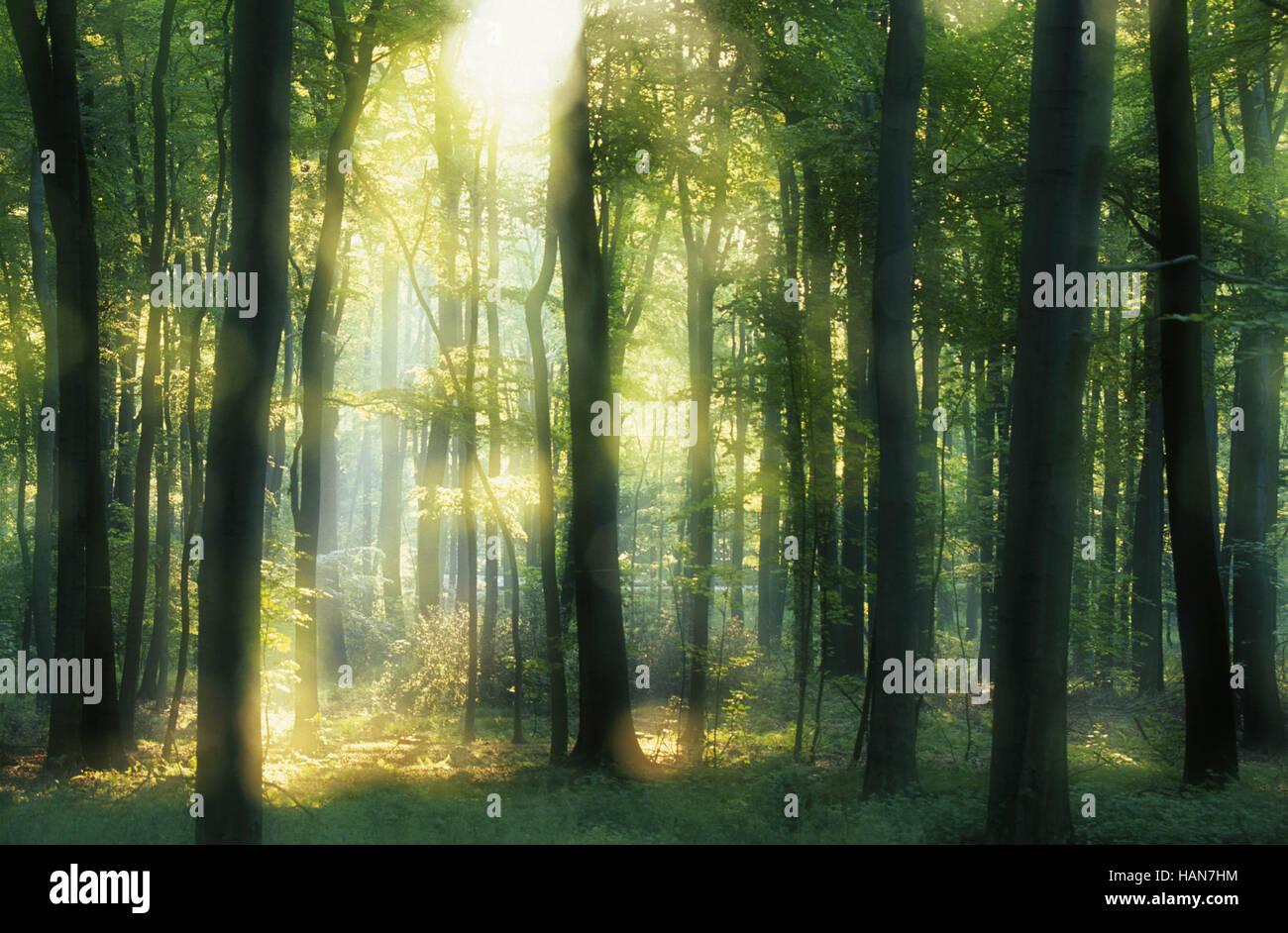 Bosque deciduo / Laubwald Imagen De Stock