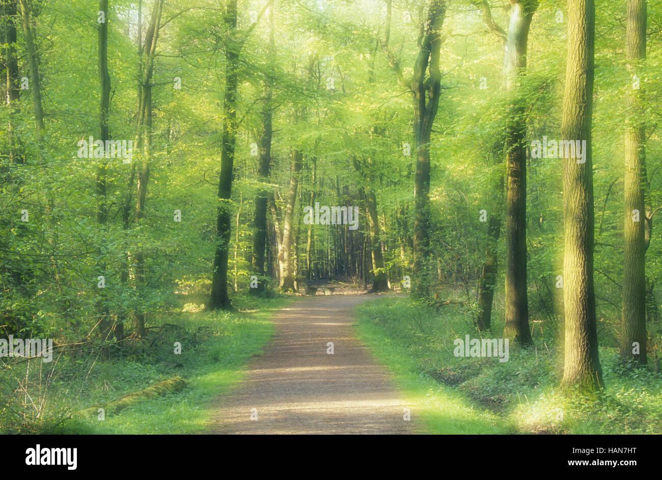 Ruta del Bosque / Waldweg Imagen De Stock