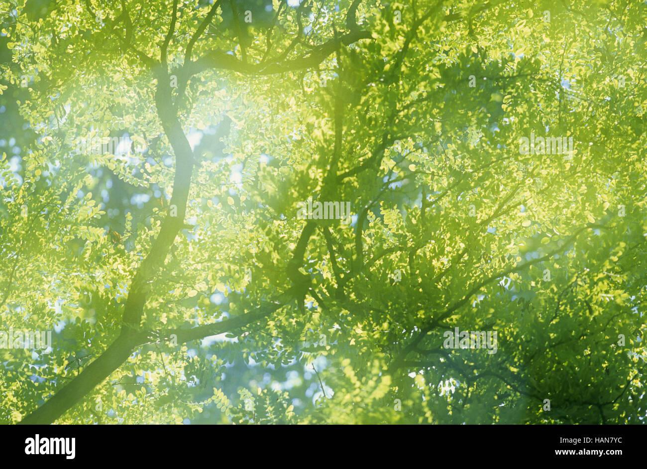 / Baumkrone Tree Top Imagen De Stock