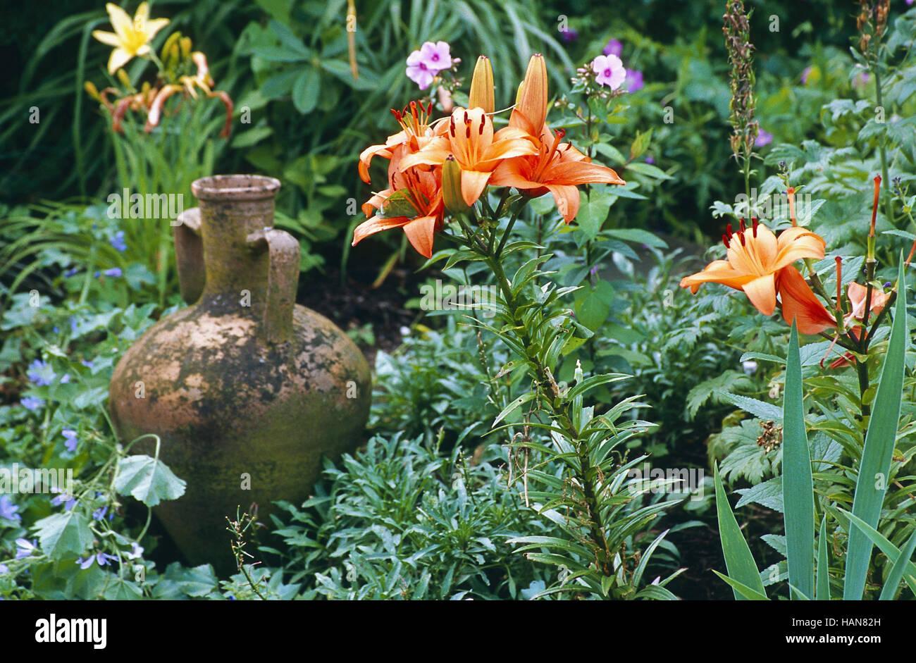 Gardenimpression Imagen De Stock