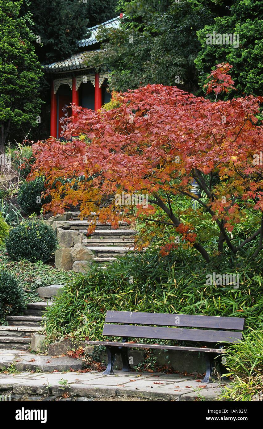 Jardín japonés / Japanischer Garten Imagen De Stock