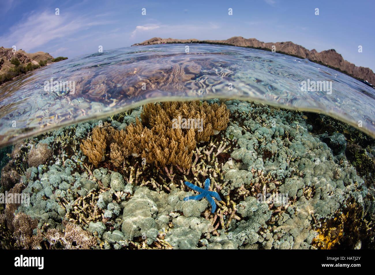 Un buen conjunto de corales crece en aguas poco profundas en el Parque Nacional de Komodo. Esta región es conocida por su alta biodiversidad marina. Foto de stock