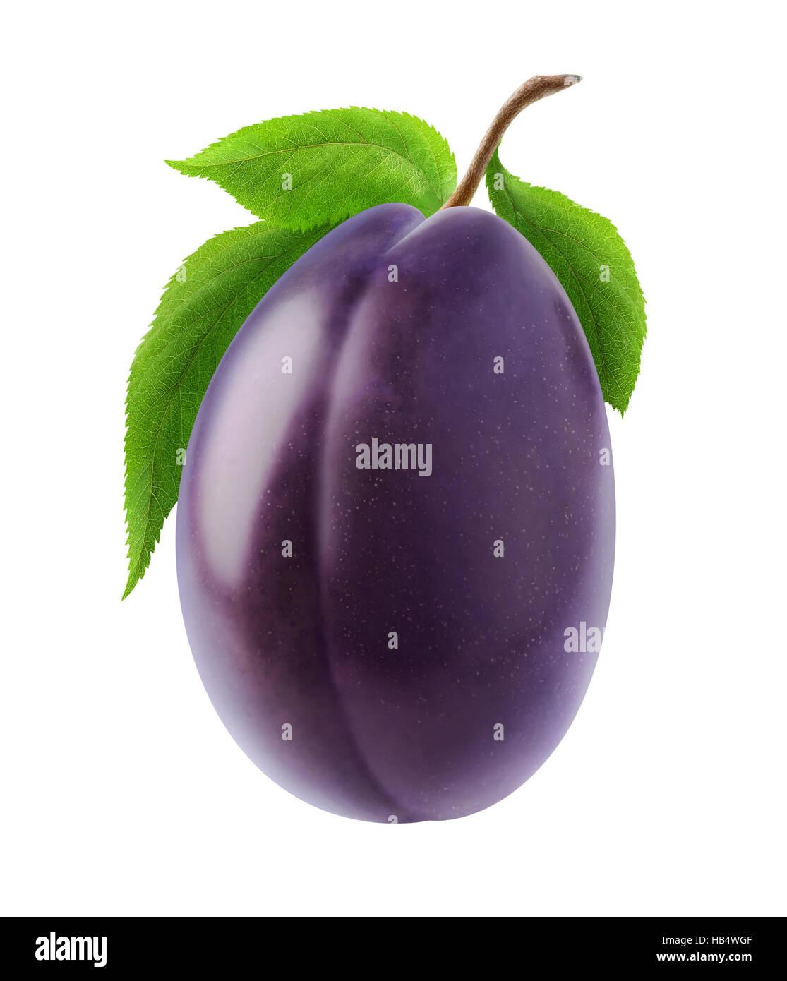 Ciruela aislados. Uno blue plum fruta en un tallo con hojas aislado sobre fondo blanco con trazado de recorte Imagen De Stock