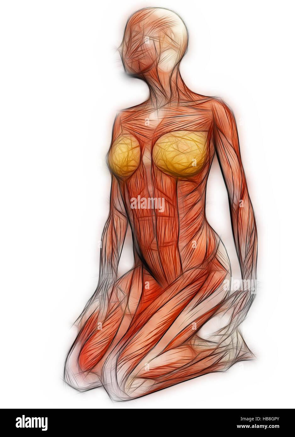 Human Muscles Imágenes De Stock & Human Muscles Fotos De Stock - Alamy