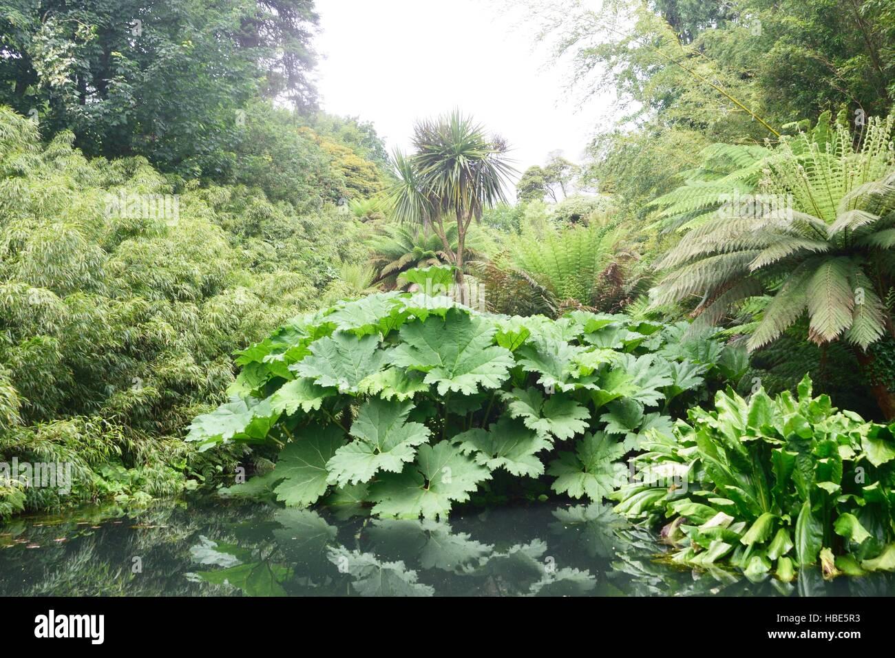 La exuberante vegetación de la jungla como plantas con estanque Imagen De Stock