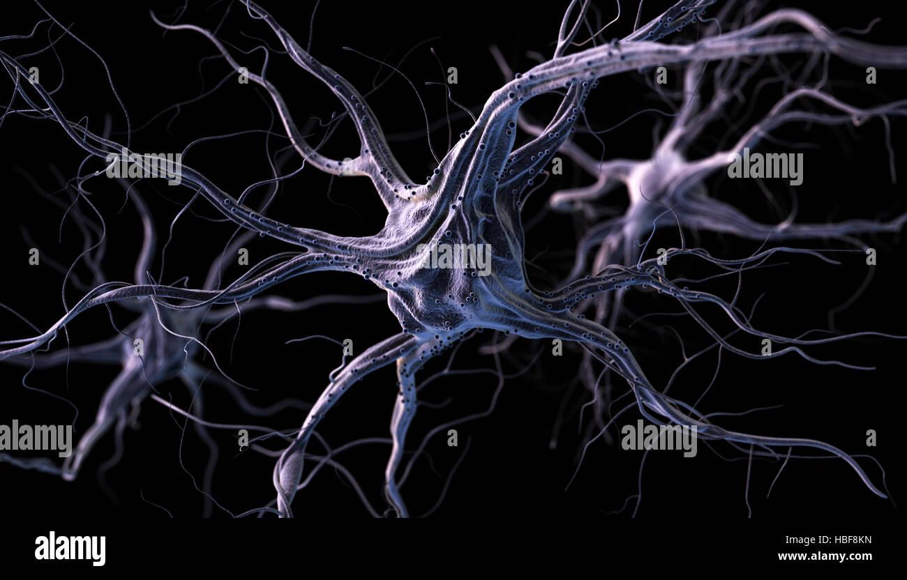 Las neuronas cerebrales realistas. Ilustración 3d. Imagen De Stock