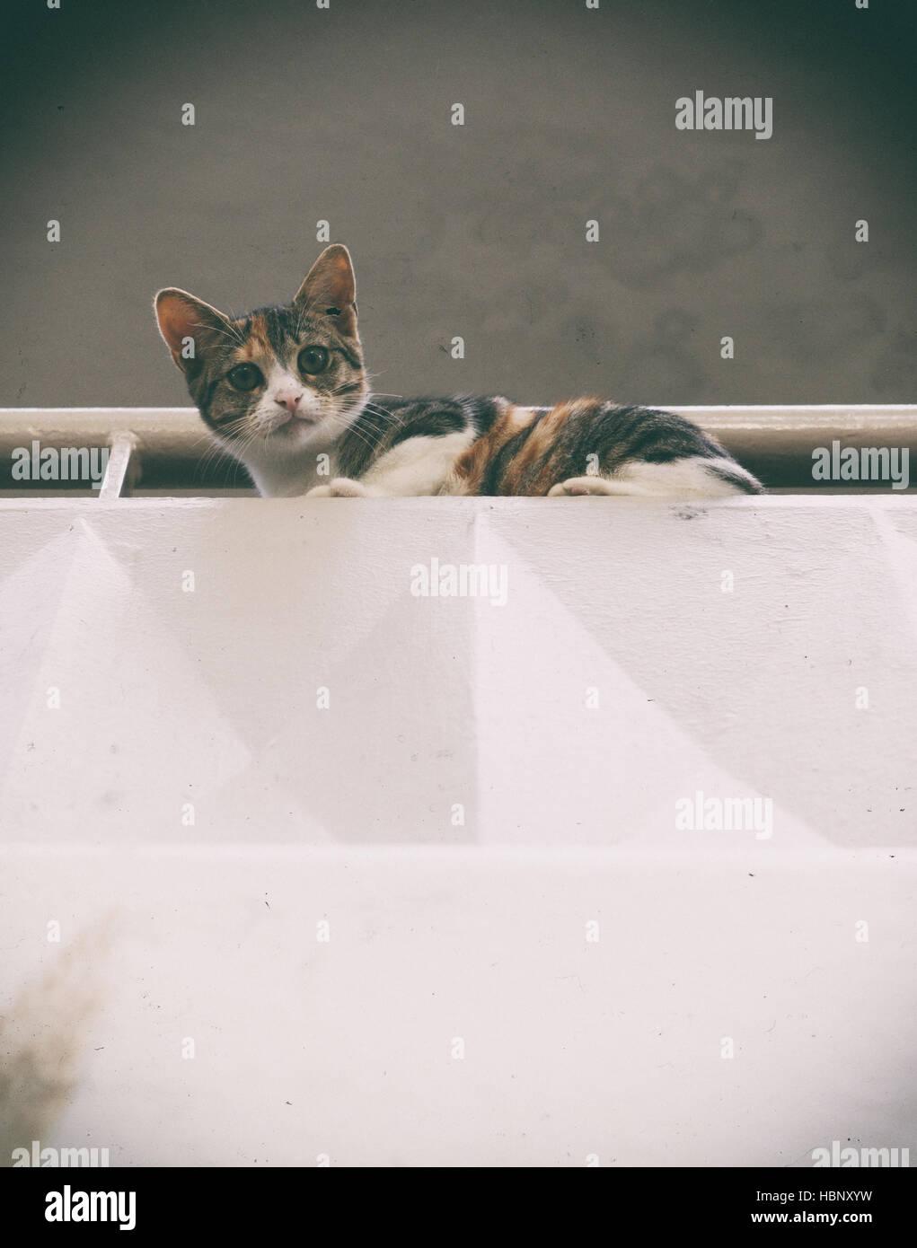 gato en el balcón Foto de stock