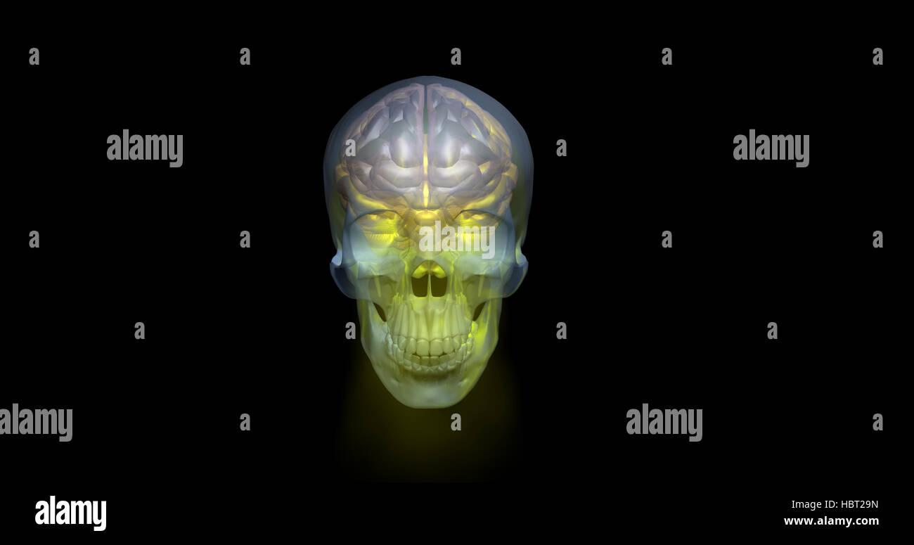 Transparente brillante cráneo y el cerebro humano, 3D Render Foto de stock