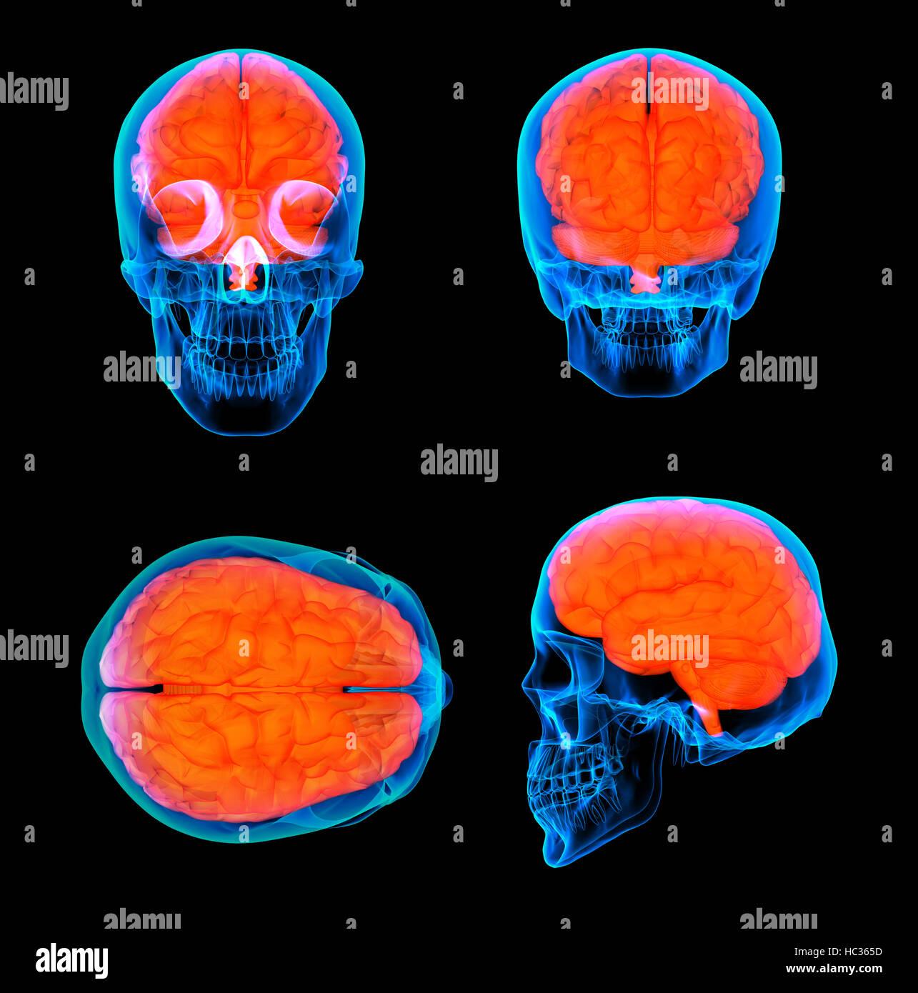 3D Render humano cerebro rojo X ray Imagen De Stock