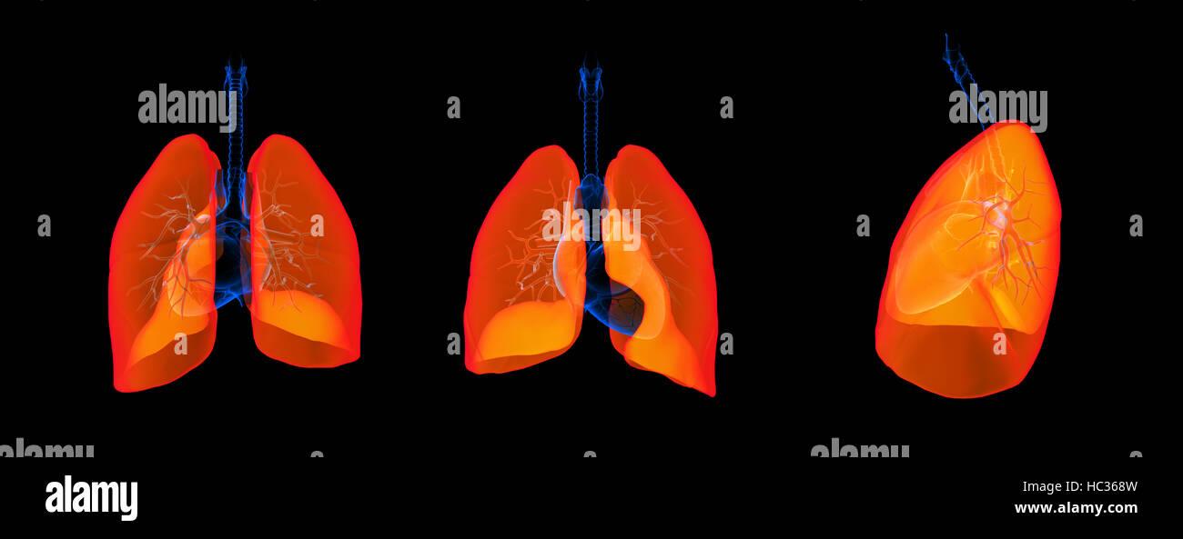3D Render ilustración del pulmón Foto de stock