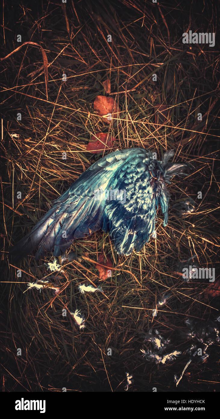 Imagen artística del ala de pájaro Foto de stock