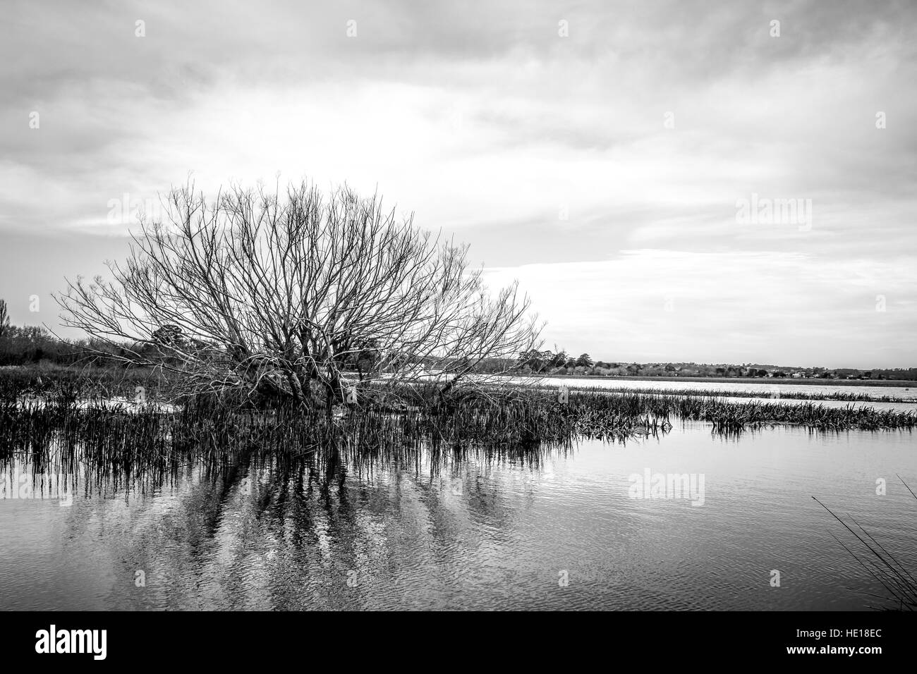 Árbol parcialmente sumergidas en agua y pastos en un lago hinchado de lluvia. En blanco y negro. B&W Imagen De Stock
