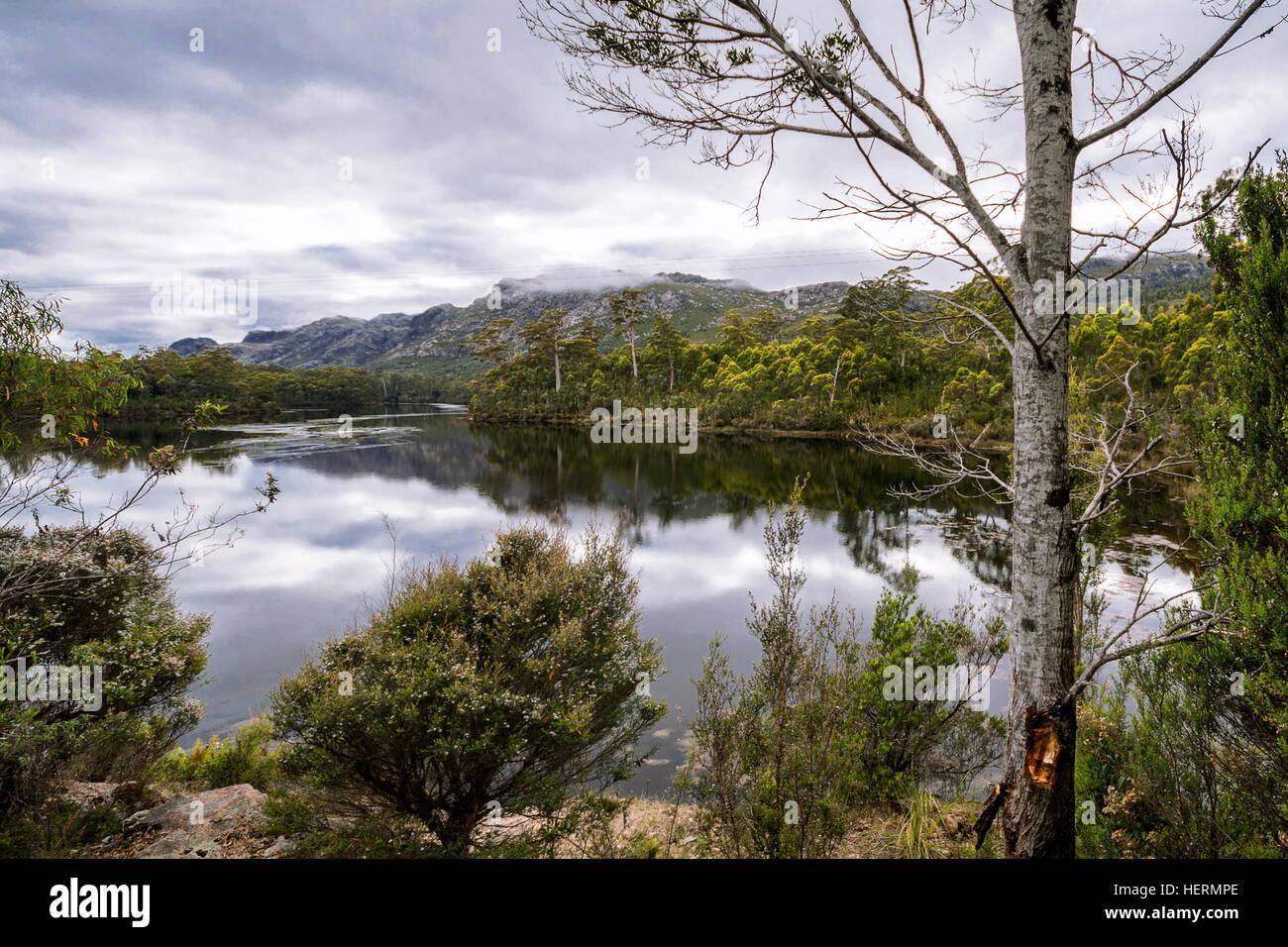 Por la mañana la vista del lago Rosebery, Tullah, Tasmania, Australia Foto de stock