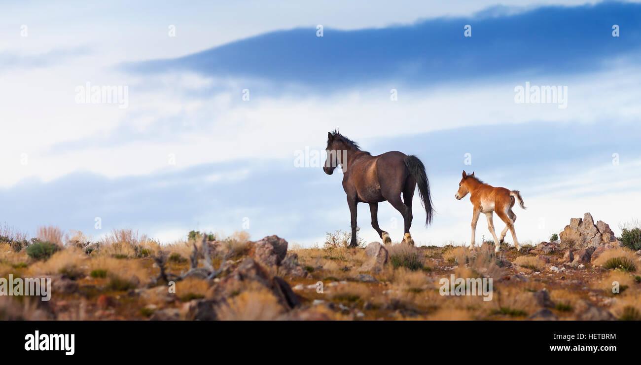 Caballo Mustang salvaje en el desierto de Nevada Imagen De Stock
