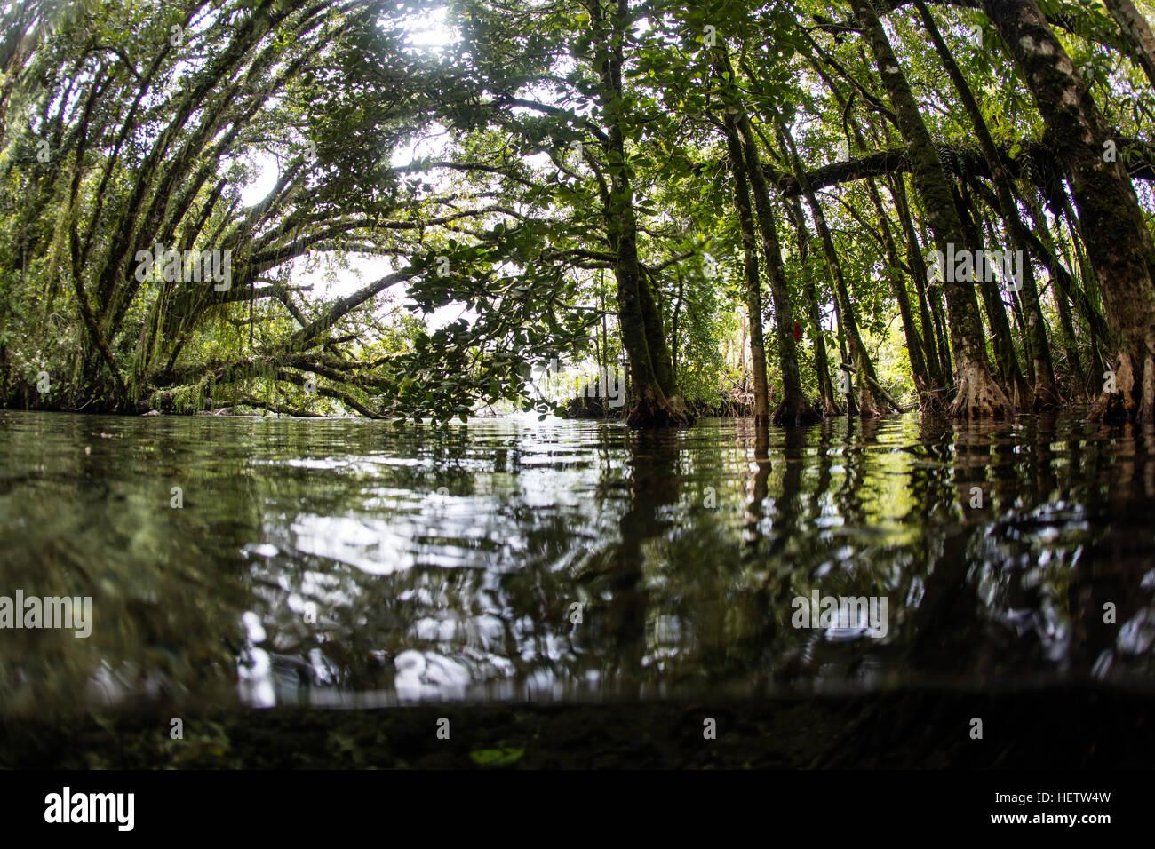 En las Islas Salomón una densa y hermosa jungla, creciendo en el borde de una remota isla, domina las aguas Imagen De Stock