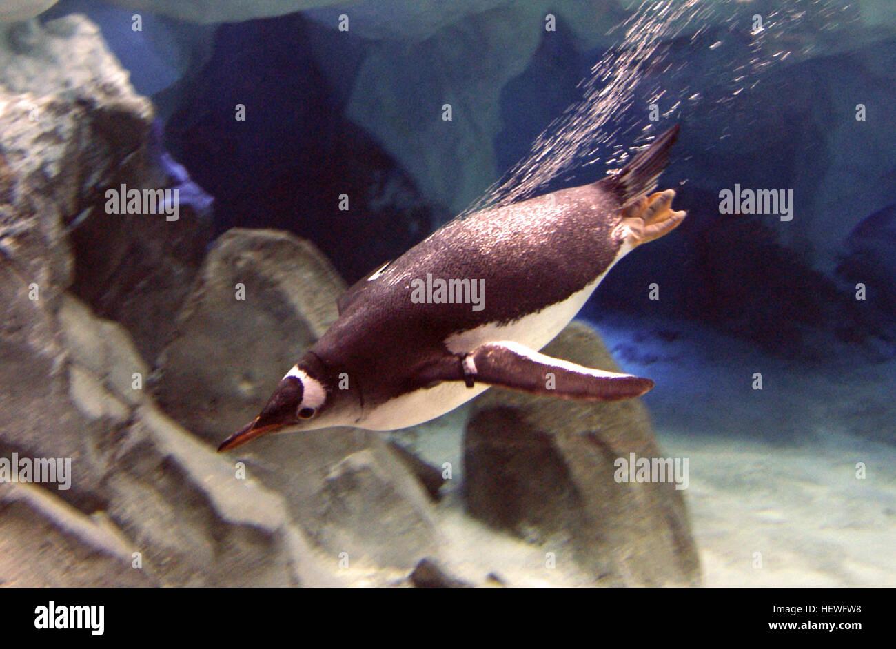 Mundo marino es un mamífero marino, el parque oceanográfico, y el parque temático situado en la Costa de Oro, Queensland, Foto de stock