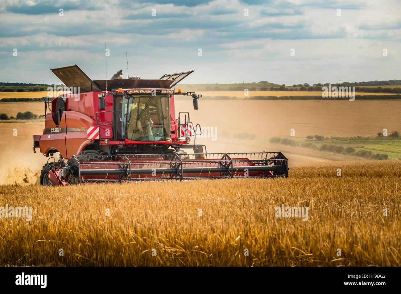 La combinación de un gran campo de cebada. Imagen De Stock