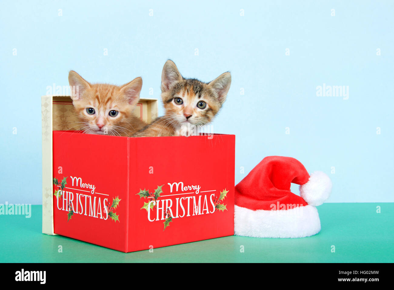 86349e7b34f4b naranja-atigrado-y-calico-tortie-tabby-gatitos-en-una-caja-navidad -roja-junto-al-pequeno-gorro-de-papa-noel-en-el-cuadro-verde-con-fondo-de-color-azul-claro  ...