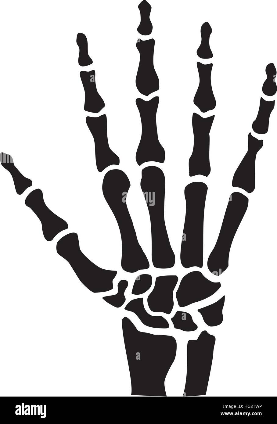 Mano esqueleto con huesos Ilustración del Vector, Imagen: 130502226 ...