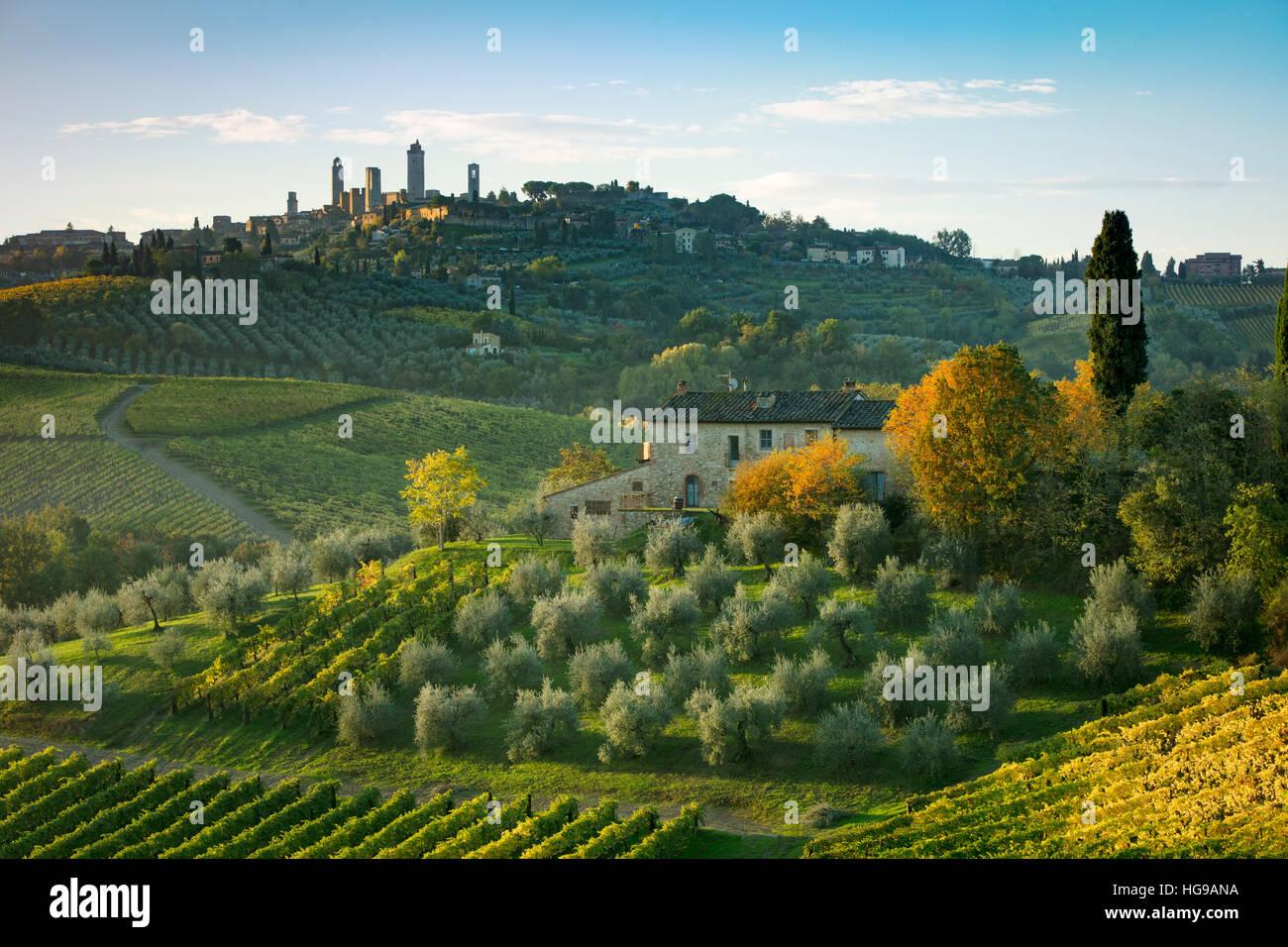 Viñedos y olivares debajo de San Gimignano, Toscana, Italia Imagen De Stock